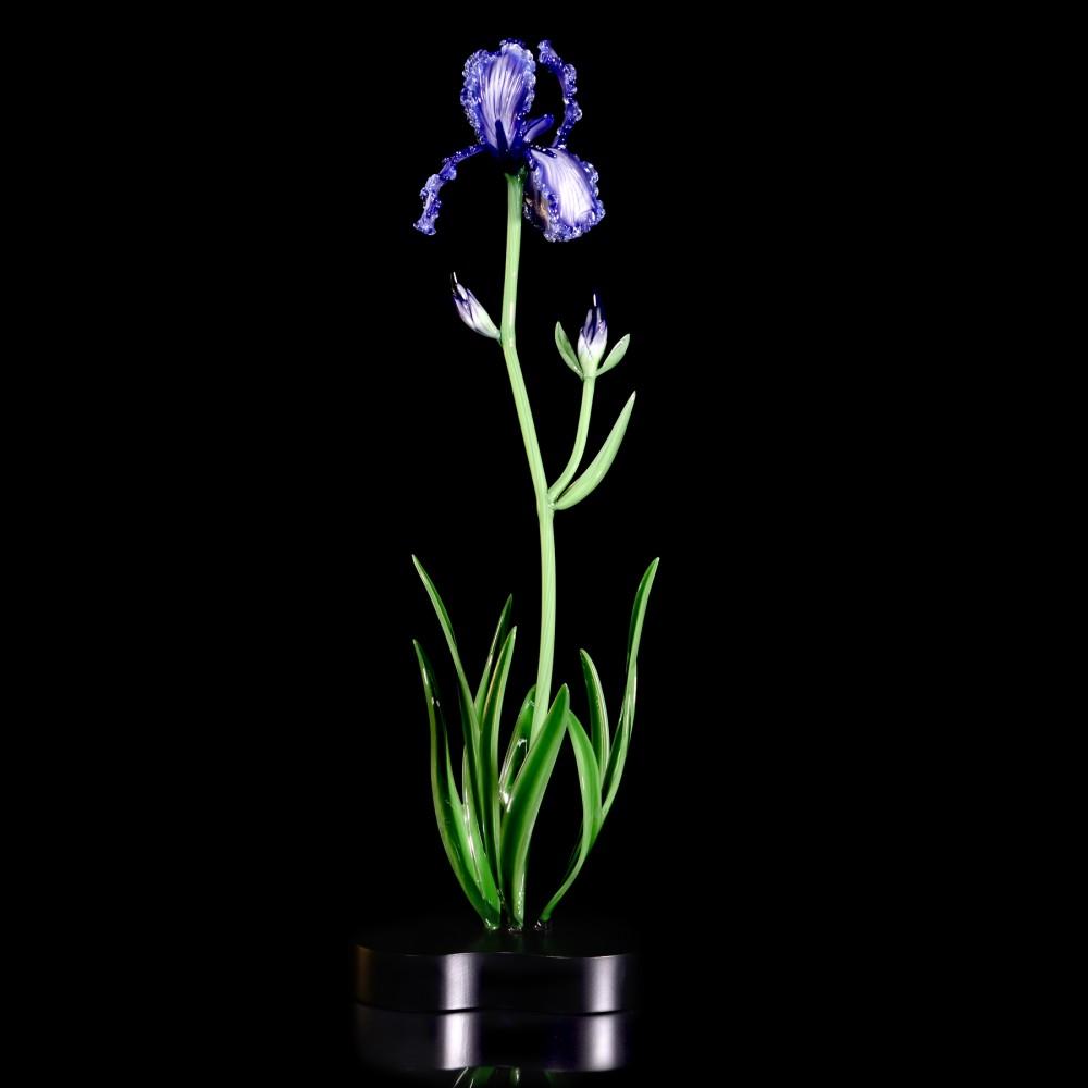 Flowers_Queen Iris_$1,995_h32xw12