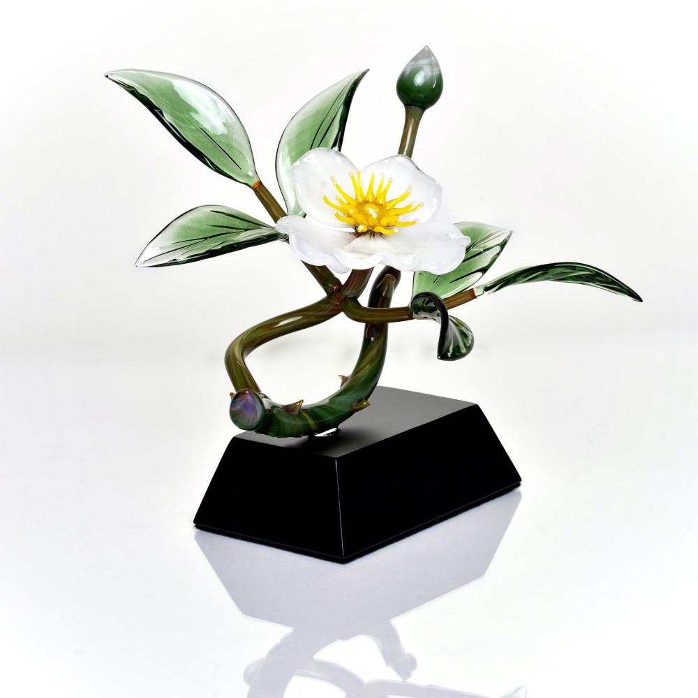 WhiteCherrokeeRose(flowers)