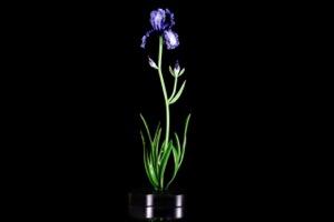 tn_Flowers_Queen Iris_$1,995_h32xw12
